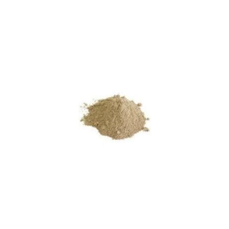 Lithothamnium (mořská řasa)