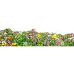 Frangipani - Blumenduft
