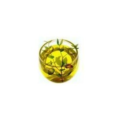 Jojobaöl - wasserlöslicher