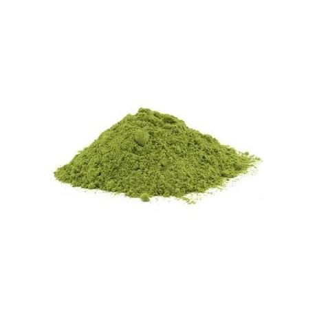 Moringa olejdárná