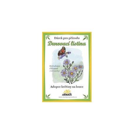 Geschenk für die Natur - Annahme von Blumen auf der Wiese - Ladaňka dvoulistá