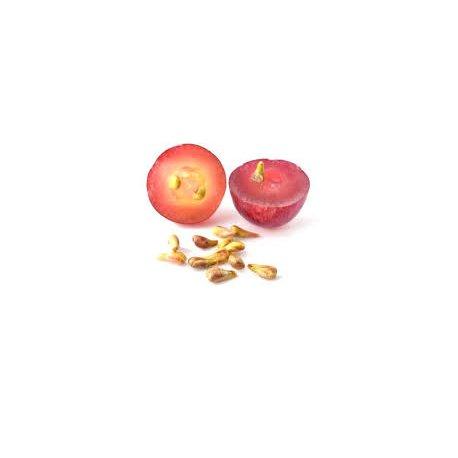 Traubenkern Extrakt 95% proanthocyanidins