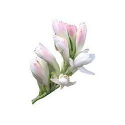 Květový vosk tuberóza