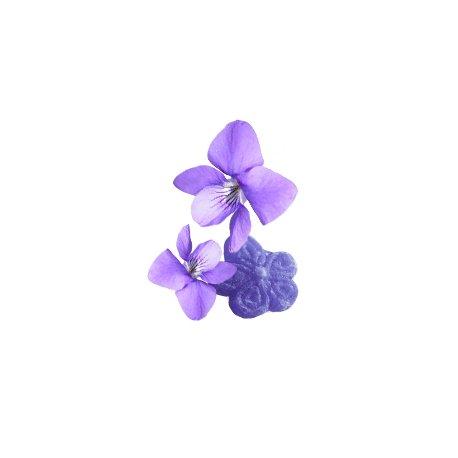Violetter, natürlicher kosmetischer Duft