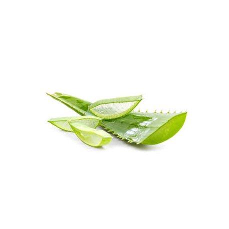 Aloe Vera 10-1