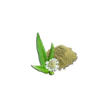 Brahmi prášek (bacopa monnieri)