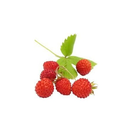 Aromatischer Extrakt der Erdbeere