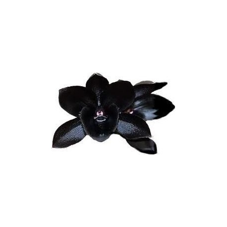 Schwarze Orchidee