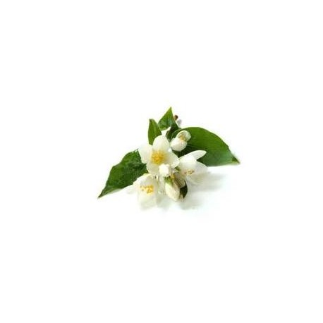 Jasmin, Rose, Orchidee antialergic