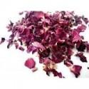 Růže květ plátky