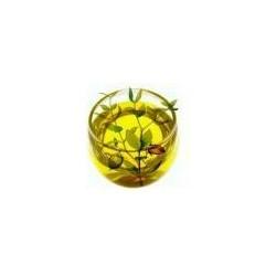 Jojobaöl, Gold, Kaltpressung